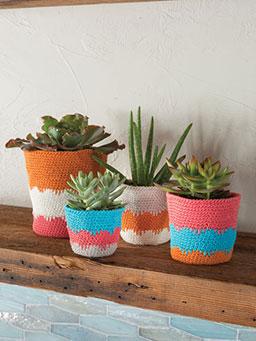 Sweet Succulent Pots